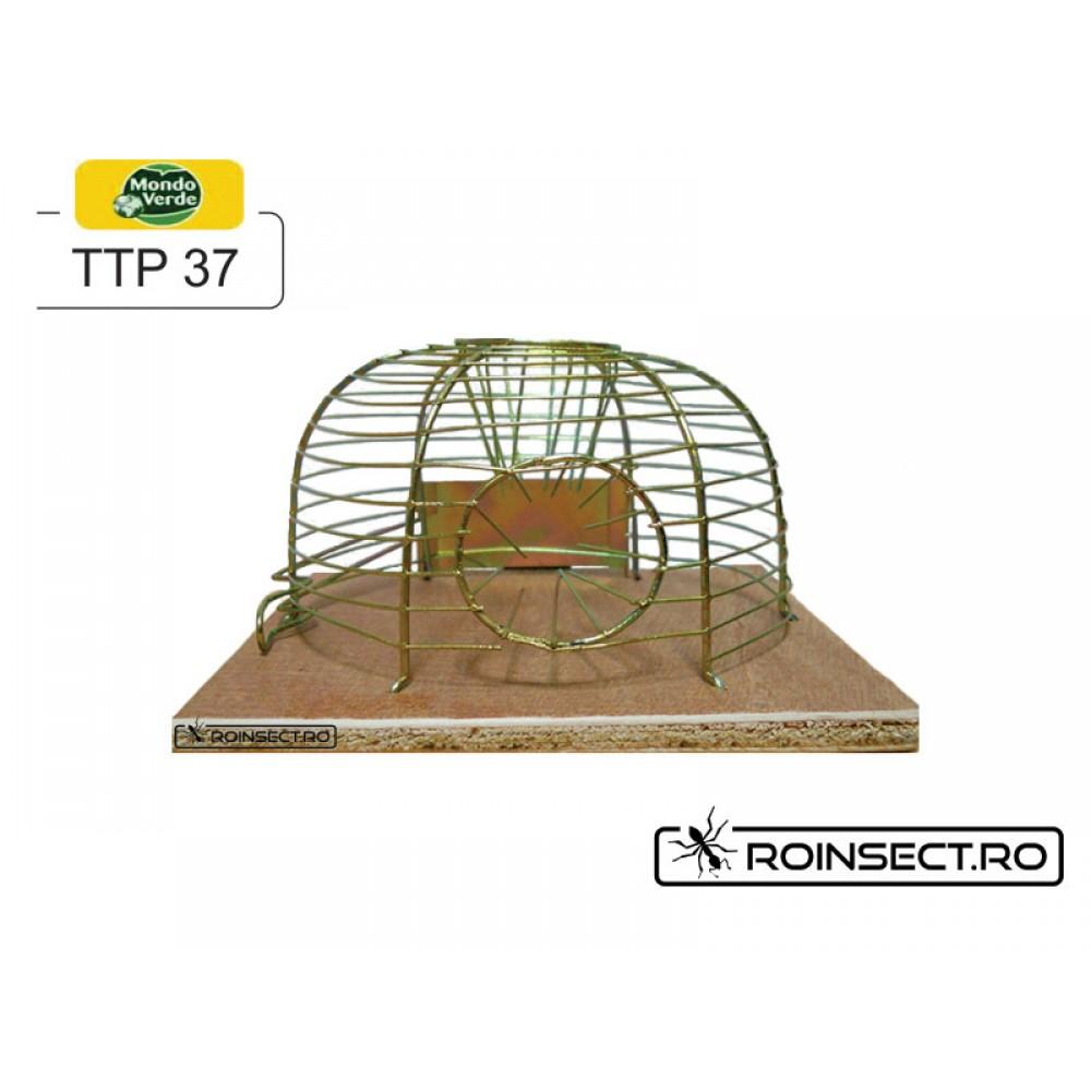 Cursa pentru soareci TTP37